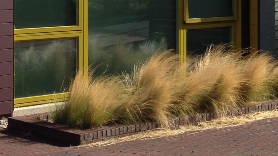 Landscaping Colwall C of E Primary School Malvern Grasses below a window