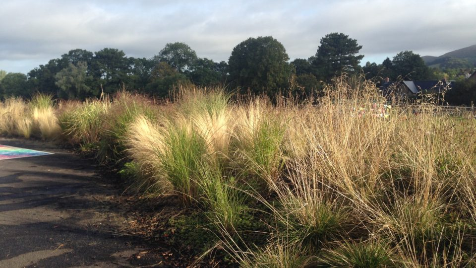 Landscaping Colwall C of E Primary School Malvern Sun on autumn grasses