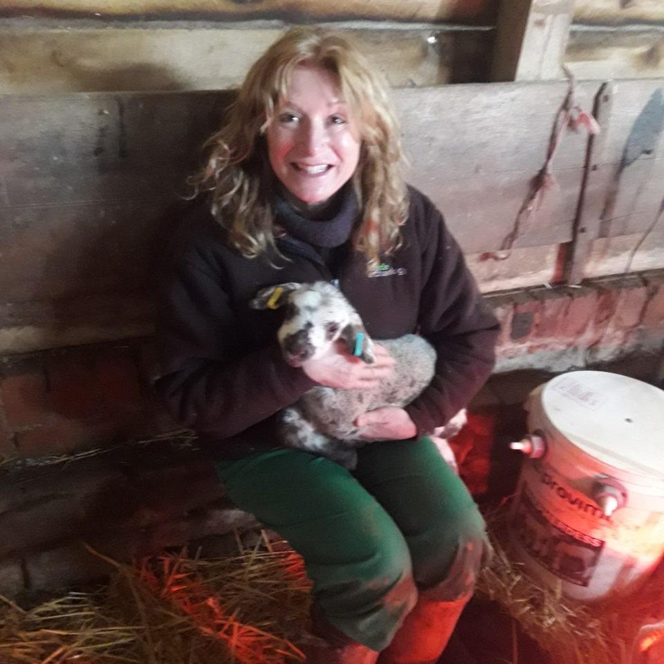 Rachel Hodges, lambing