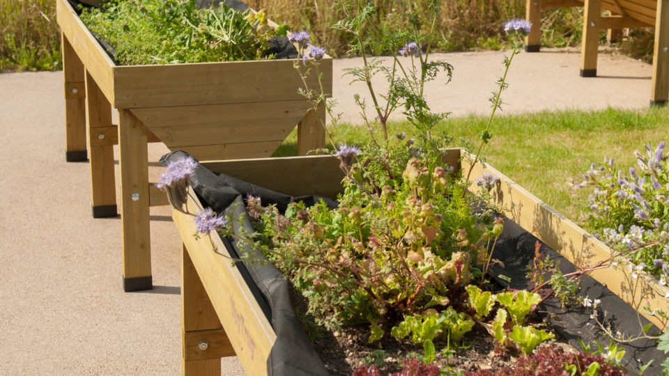 Raised bed with flowers and vegetables